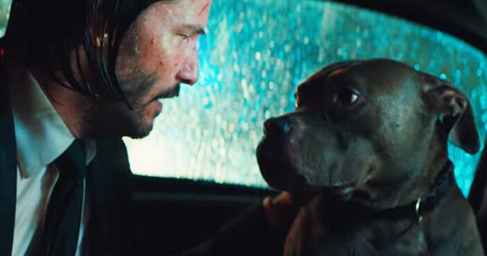 John Wick takes care of his dog