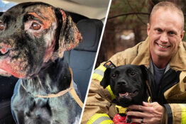 lexi the burnt dog gets adopted by firefighter