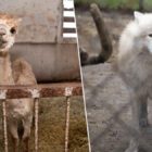 Over 100 Exotic Animals Rescued After Years Of Neglect And Abuse