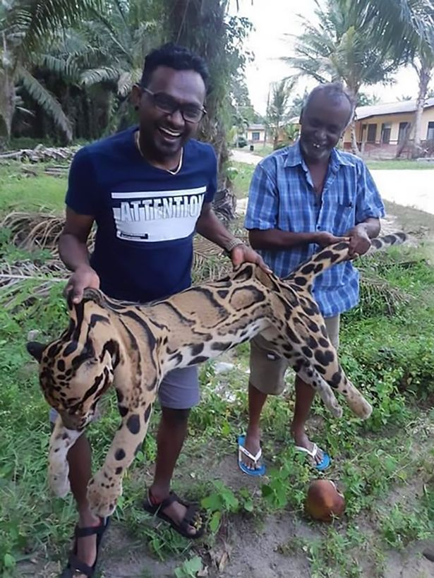 Poachers Photographed Laughing And Smiling With Body Of Rare Leopard
