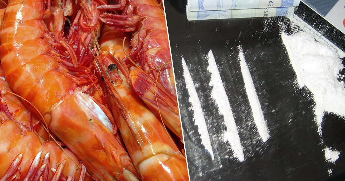 Drugs found in shrimps