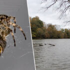 Woman Rolls Van Into River After Seeing Spider In Her Lap
