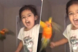 Girl trains bird to attack when she screams