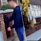 Teen Who Slapped Cat Off A Wall Arrested