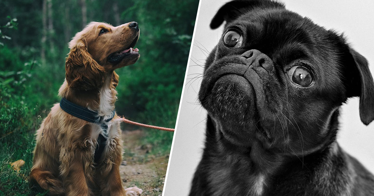 Millions Of Dog Owners Unaware Pet Is Suffering Pain And Mobility Issues