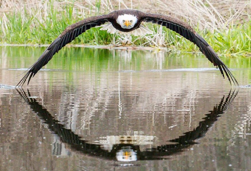 Photographer captures perfectly timed shot of bald eagle