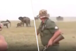 hunters run away as elephants charge at them after they shoot one of the herd