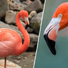 Flamingo Euthanised After Child Broke Bird's Leg Throwing Rocks