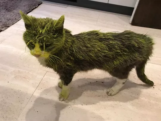 cat dies after being sprayed with yellow paint