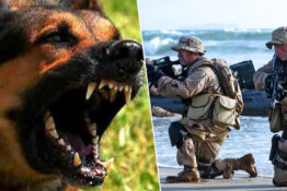 navy SEAL explains what to do if you're attacked by a dog