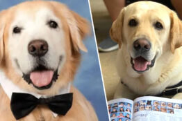 Parkland therapy dogs yearbook