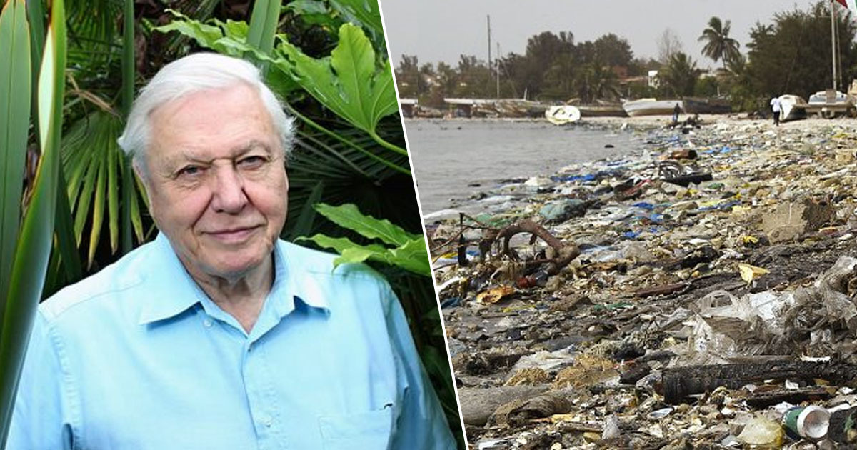 Sir David Attenborough Calls Plastic Pollution An 'Unfolding Catastrophe' In New Report
