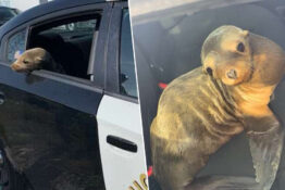 Seal arrested after trespassing on road