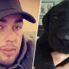 Man Who Beat Puppy To Death With Slipper For Pooing Indoors Gets Six Months