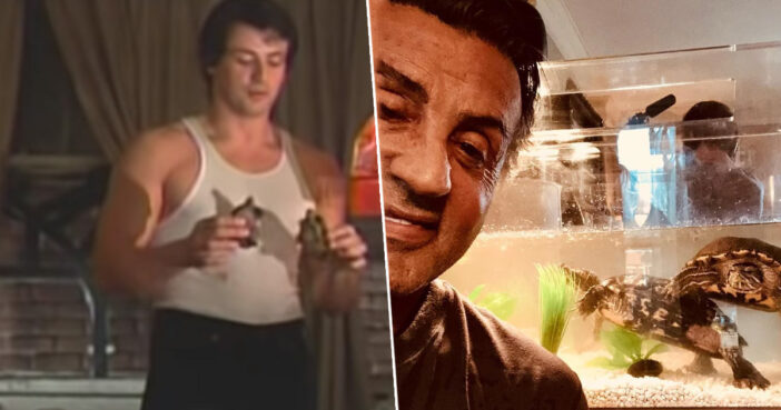 Syvester Stallone has still kept the turtles from Rocky