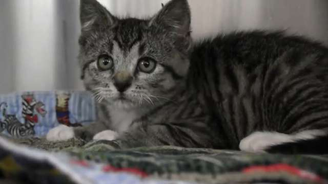Kitten making recovery after found covered in hardening spray
