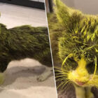 Cat Dies After Being Sprayed In Face With Yellow Paint