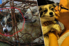 Dog rescued from Yulin Festival