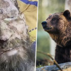 Man Mistaken For Mummy Rescued From Bear Den After One Month