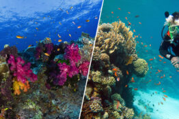 Eight Countries Unite To Save World's Coral Reefs In Landmark Environmental Alliance