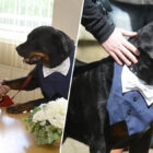 Pet Dog Is Best Man At Wedding After Couple Met At His Rescue Centre