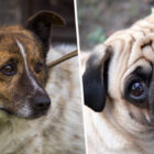 Dogs Develop 'Sad Eyes' Look To 'Get On Better With Humans', Scientists Say