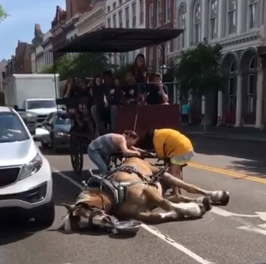 Horse collapses in street