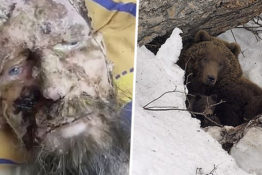 Mystery surrounds bear attack