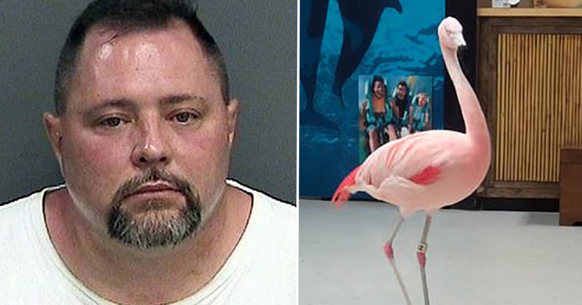 Pinky flamingo killer died