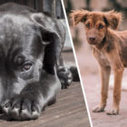 Animal Cruelty To Be Punishable By Up To Five Years In Prison Under New Bill
