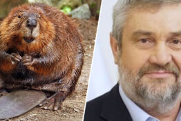 Polish minister claims beaver is an aphrodisiac.
