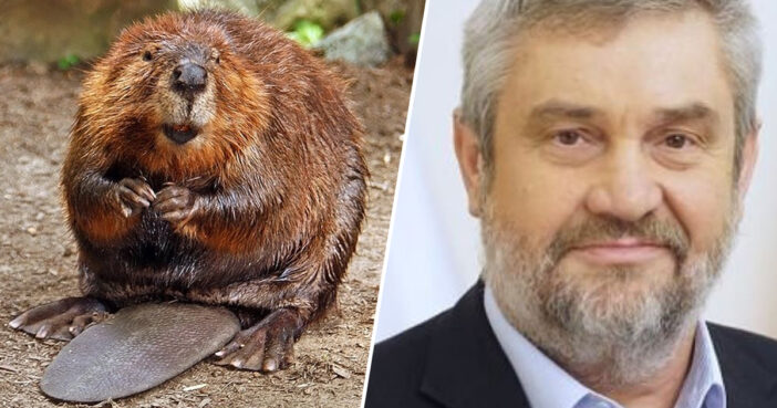 Eating Beaver Is An Aphrodisiac, Polish Minister Claims