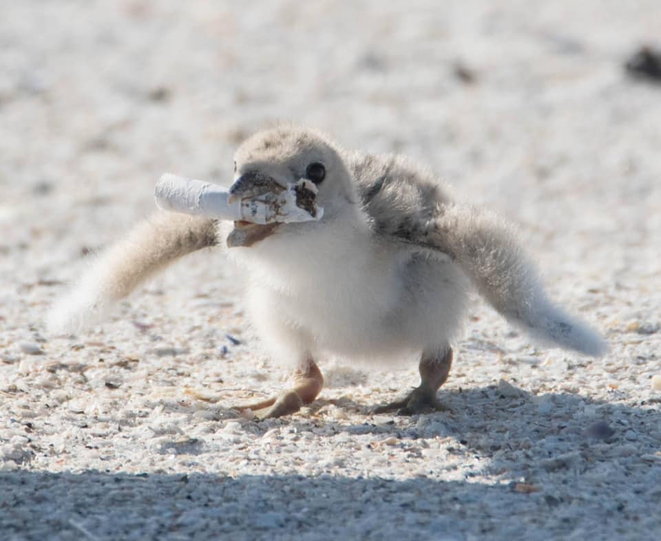 baby bird with cigarette in mouth