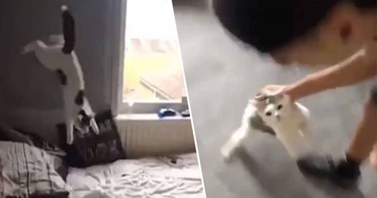 RSPCA Hunt For Man Filmed Slapping And Throwing Cat On Snapchat