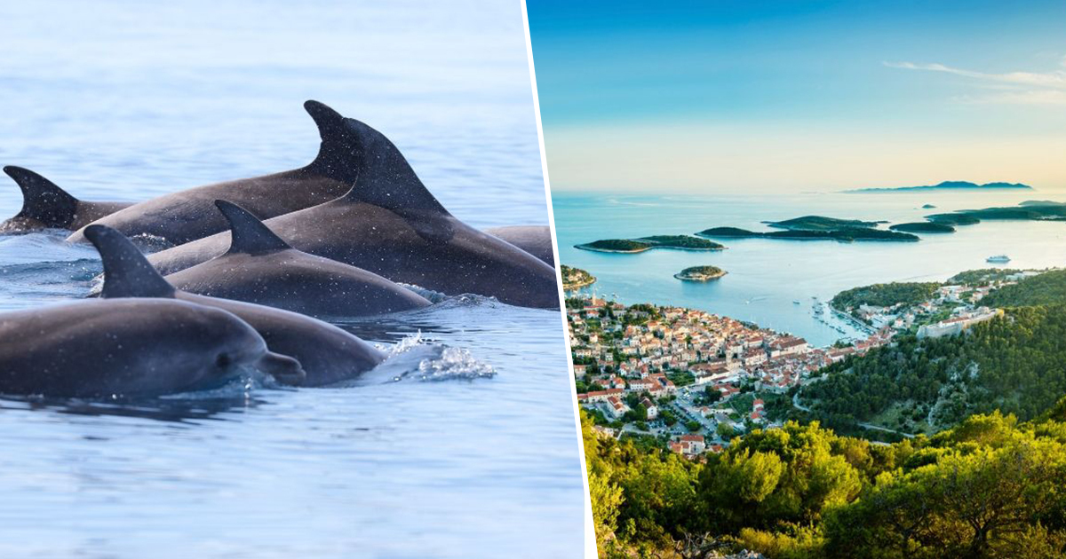 Croatia Looking For Travel Enthusiast To Look After Dolphins For A Summer