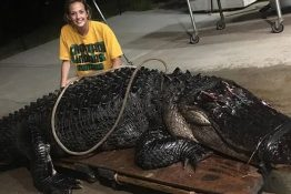 463-Pound Alligator Found On Florida Highway After Getting Hit By Truck