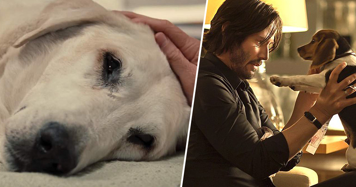 Website Lets You Know If Dogs Die In Films So You Can Prepare The Tissues