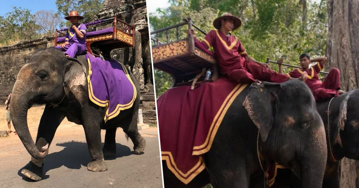 Cambodia Will Ban Elephant Rides At Angkor Wat In 2020