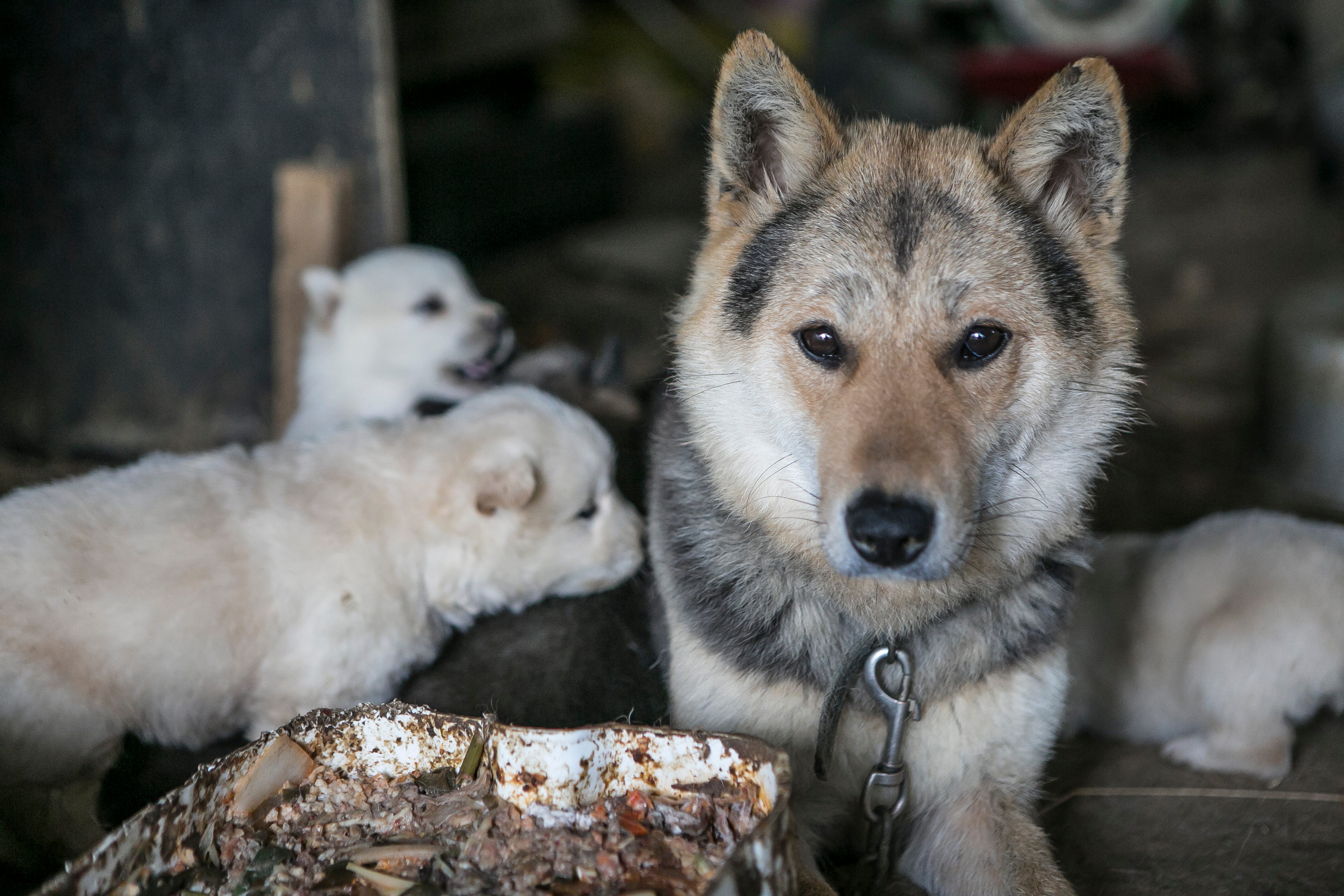 Dogs at Gupo dog meat market