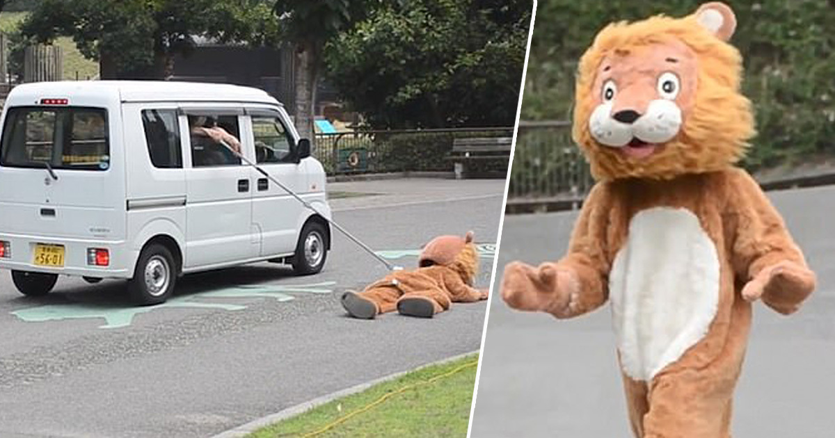 Man Wears Lion Costume So Zookeepers Can Practice What To Do When Real Lion Escapes