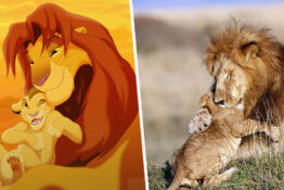 lion king hug