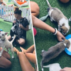 Hotel In Bali Let's You Play With Rescued Puppies By The Pool