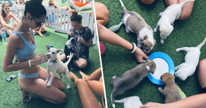 Bali hostel has rescue puppies to play with.