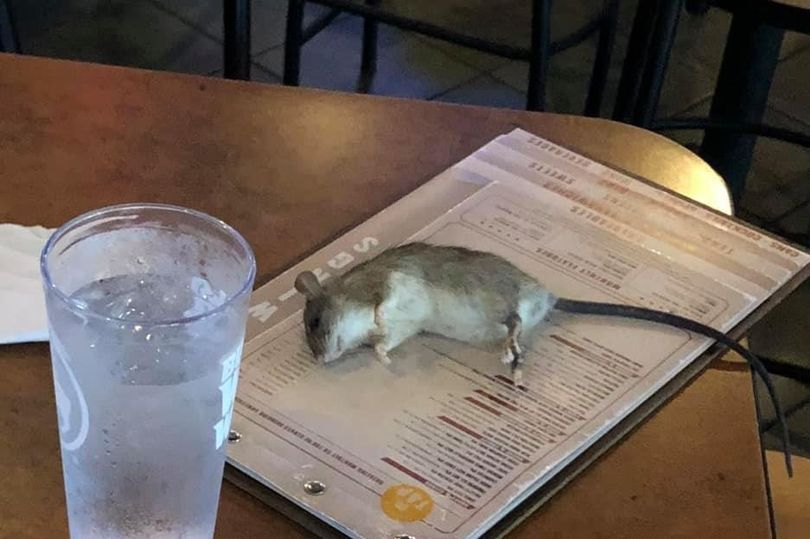 Rat Falls From Restaurant Ceiling And Lands On Woman's Table