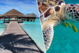 Intern wanted to look after turtles in the Maldives