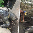 Endangered Sea Turtle Dies After Pooing Out Plastic Bags