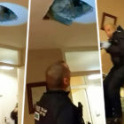 Wanted Man Hiding In Ceiling Falls Through Onto Cops Looking For Him