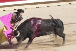 Bull speared to death