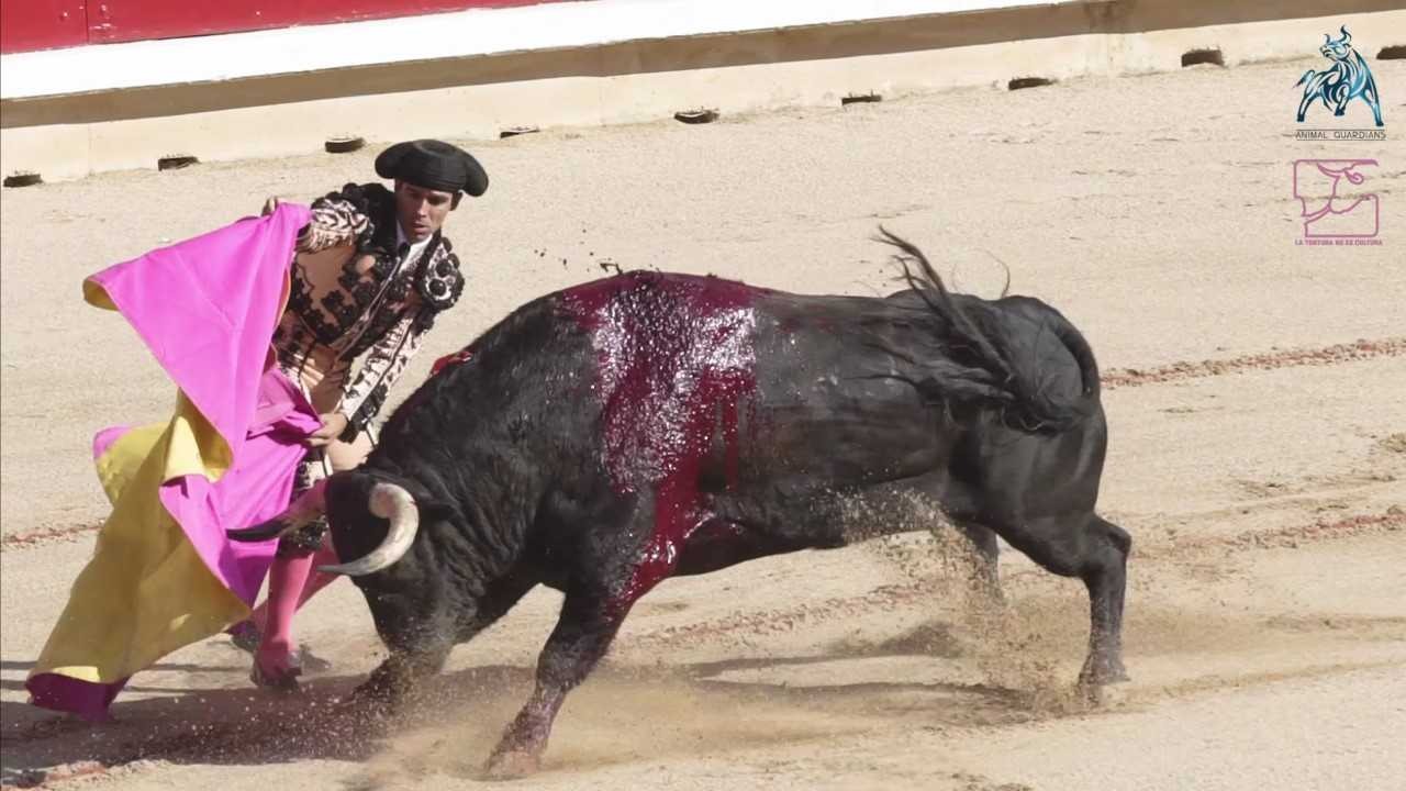Call For Pamplona Bull Run To End As Doomed Bulls Vomit Blood Through Their Noses