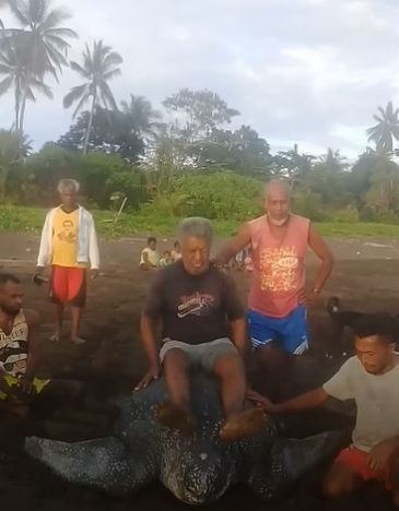Locals Torture Endangered Leatherback Turtle By Riding On Its Back